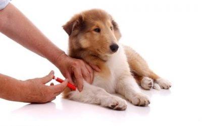 Після щеплення у собаки пронос: причини і лікування