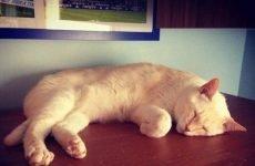 У кота пронос і блювання: що робити, чим лікувати?