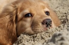 Зелений пронос у собаки: причини і лікування