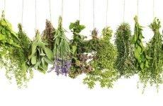 Чай при проносі (діареї): міцний, зелений, іван-чай
