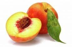 Чим корисний персик для здоров'я людини