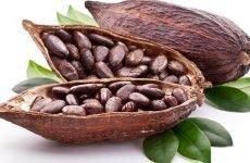 Чи можна пити какао при гастриті і як його правильно приготувати?