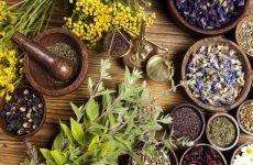 Корисні трави при гастриті шлунка і популярні збори