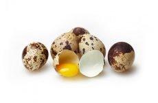 Користь перепелиних яєць при лікуванні шлунка гастриті