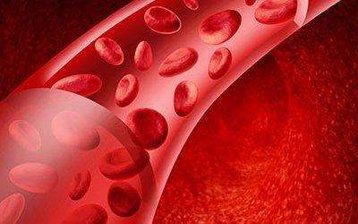 Ефективні венотоніки та їх аналоги при геморої, варикозі і застій в судинах мозку