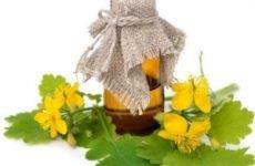 Чистотіл: краплі для носа при лікуванні поліпів, для полоскання горла і інші рецепти