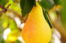 Які фрукти, овочі і ягоди можна їсти при гастриті шлунка з підвищеною кислотністю