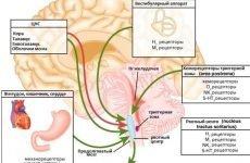 Які таблетки допомагають від нудоти і блювоти