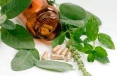 Лікування циститу травами: принципи та особливості терапії, які трави і як приймати