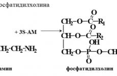 Липолитик Фосфатидилхолін: склад, ціна, показання, протипоказання, побічні ефекти, відгуки