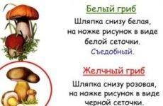 Помилкові гриби (фото і опис): як відрізнити помилковий білий гриб від їстівного і допомогти при отруєнні