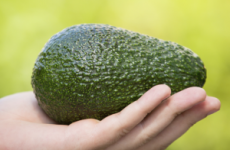 Можна чи ні авокадо при гастриті з підвищеною кислотністю