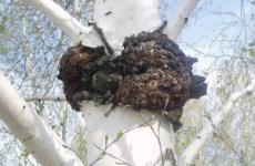 Народні засоби від гастриту в домашніх умовах: лікування травами, перекисом водню, муміє