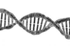 Подагра і генетика, генетичне захворювання…