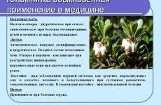 Трава мучниця при циститі у чоловіків і жінок: властивості, рецепти відварів і настоїв, відгуки