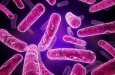 Туберкульоз сечового міхура у чоловіків та жінок: причини, симптоми, діагностика, лікування