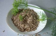Гарбузове насіння від глистів: як правильно приймати, рецепти