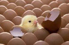 Чи можлива вагітність при поликистозе яєчників — думка фахівців