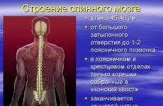 Спинний мозок: види заболевай і методики лікування