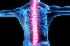 Вправи для поперекового відділу хребта: особливості