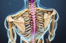 Вправи для зміцнення грудного відділу хребта