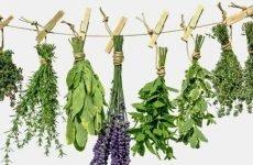 Використання зборів і трав для лікування виразки шлунка: види і рецепти