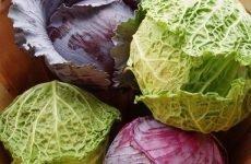 Можна їсти капусту при виразці шлунка і яку краще вибрати?