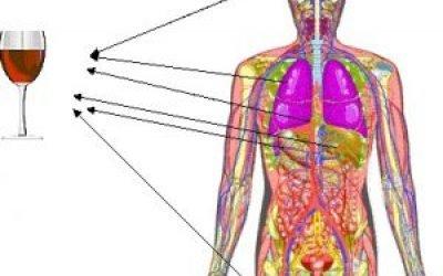 Вплив алкоголю на мозок і нервову систему людини, відновлення клітин після відмови від спиртних напоїв