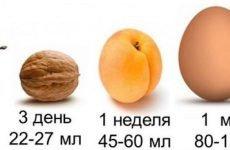 Обсяг шлунка у дитини по місяців до року і більш старшого віку