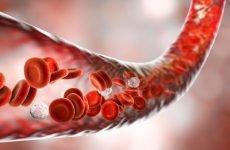Продукти для поліпшення кровообігу