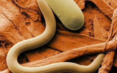 Симптоми зараження паразитами: коли починати лікування