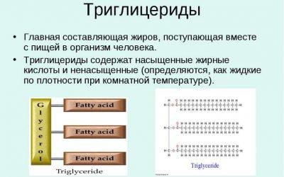 Рівень тригліцеридів і рівень холестерину: на що вони впливають
